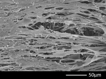 Resultados apresentados pela matriz 3d CellFate da Biocelltis Biotecnologia