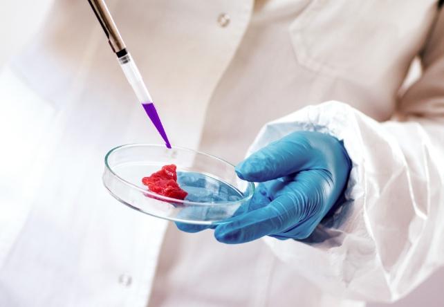 Tecido Muscular Carne de Laboratório, está sendo produzido pela Biocelltis Biotecnologia, em Santa Catarina